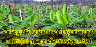banana cultivation in tamil