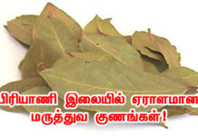 bay leaf benefits in tamil