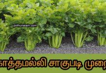coriander cultivation