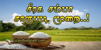 Seeraga Samba Rice Cultivation