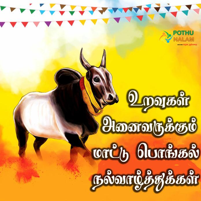 mattu pongal wishes in tamil