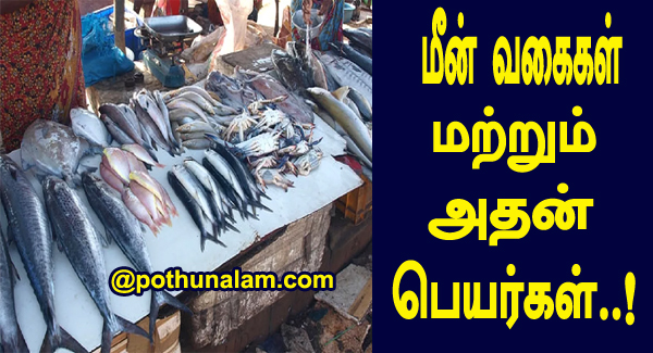 List of fish names in tamil and english