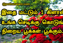 Rose Plant Care in Tamil