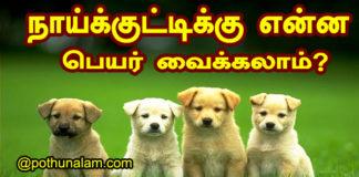 dog names 2020