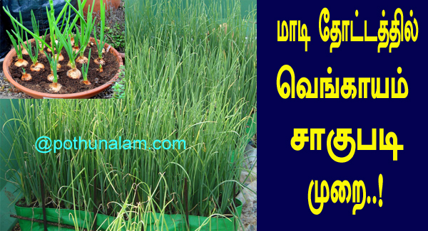 onion cultivation in tamil
