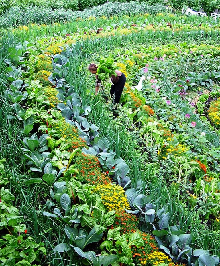 Intercropping advantages