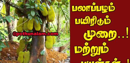 jackfruit benefits