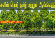 Tree names list
