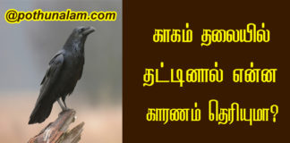 crow hit on head in tamil