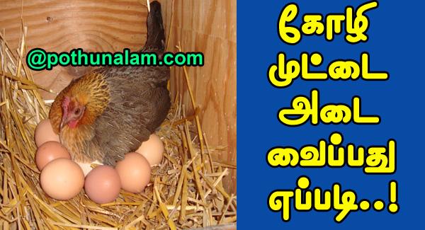 Chicken Egg Hatching Days