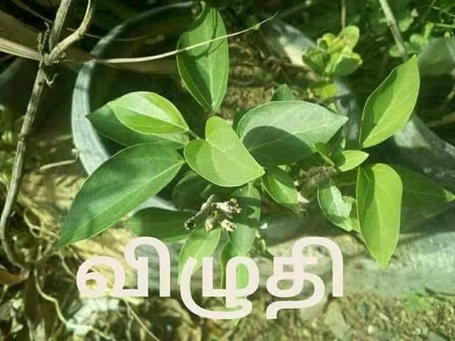 விழுதி மரம்