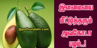 Avocado Benefits Health