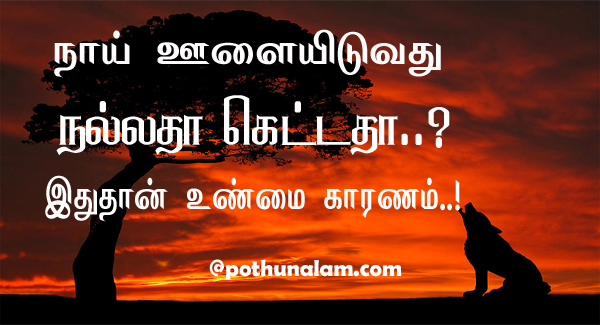 dog howling reason in tamil