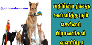 Lucky Pets For home