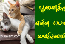 Cat Name in Tamil