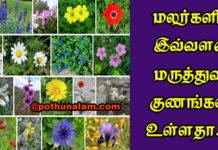 Medicinal Flowers And Its Uses