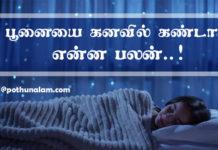 Cat Dream Meaning in Tamil