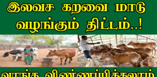 Karavai Maadu Valarpu In Tamil