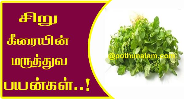 Siru Keerai Benefits in Tamil