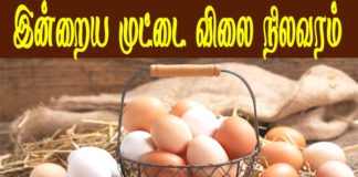 NECC Egg Price Today