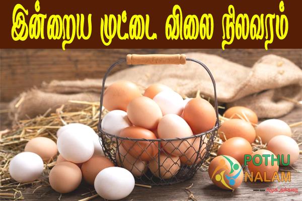 NECC Egg Price Today