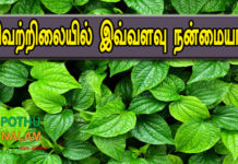 Betel Leaf Benefits in Tamil