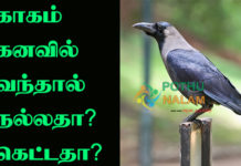crow dream meaning in tamil