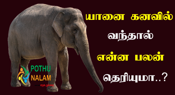 Elephant Kanavu Palangal in Tamil