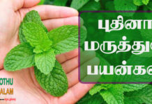 Pudina Benefits in Tamil