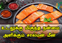 Salmon Fish in Tamil
