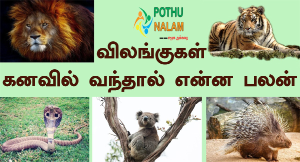 Animals Kanavu Palangal in Tamil