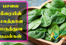 Pasalai Keerai Benefits