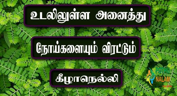 Phyllanthus Niruri in Tamil