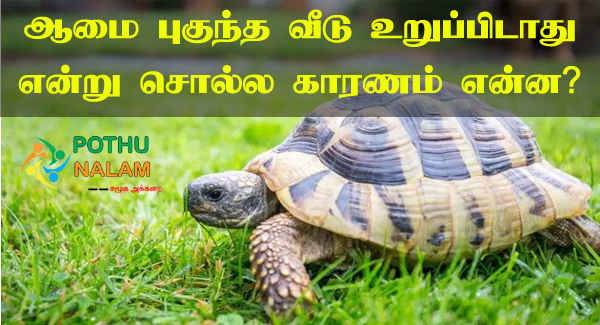 Aamai Veetil Vanthal Enna Palan