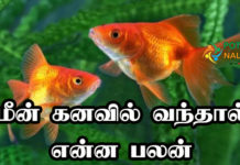Fish Dream Meaning in Tamil