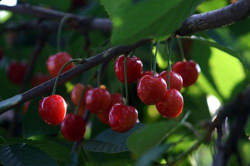 rare fruits in india