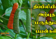 Thippili Benefits in Tamil