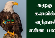 Eagle in Dream Meaning in Tamil