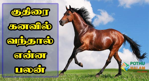 Kuthirai Kanavu Palangal in Tamil