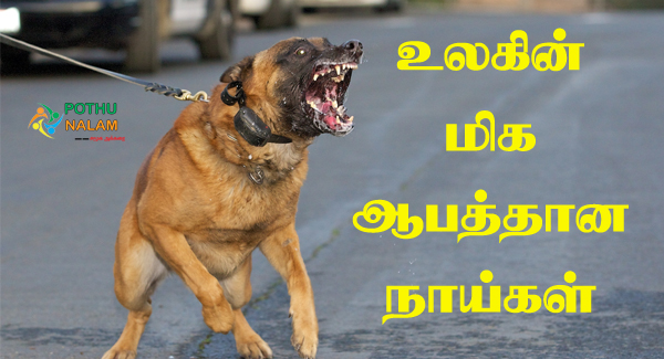 Most Dangerous Dogs in Tamil