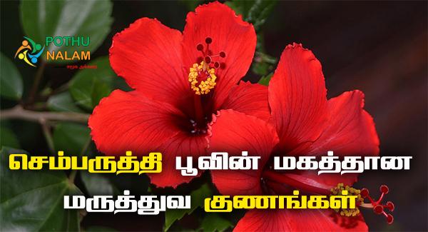 Semparuthi Poo Benefits in Tamil