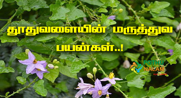 Thoothuvalai Benefits in Tamil