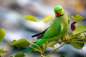 parrot names female in tamil