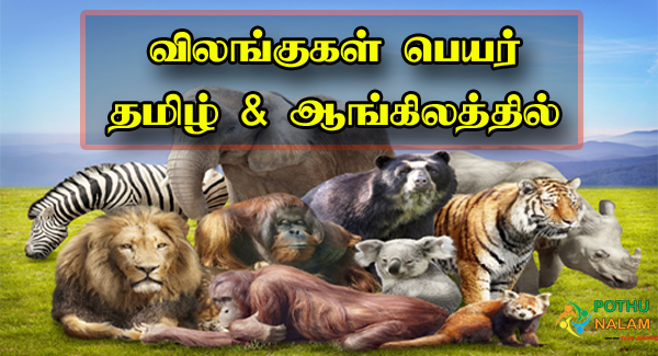 Animals Name in English and Tamil