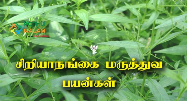 Siriyanangai Uses in Tamil