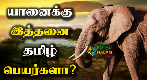 Elephant Other Names in Tamil