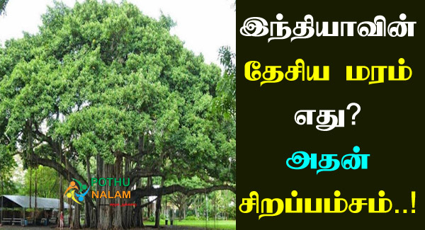 National Tree Of India in Tamil