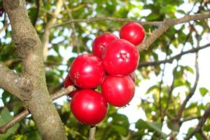 fruits name in english and tamil