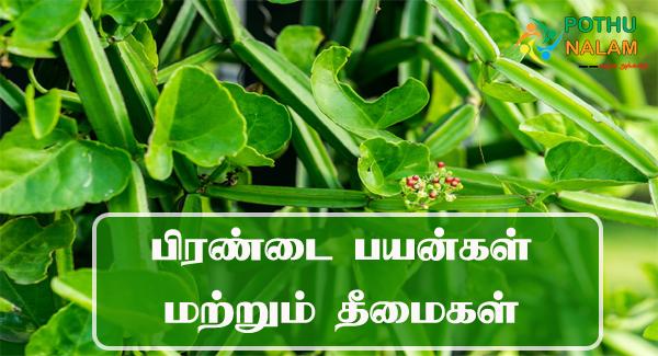 pirandai uses in tamil