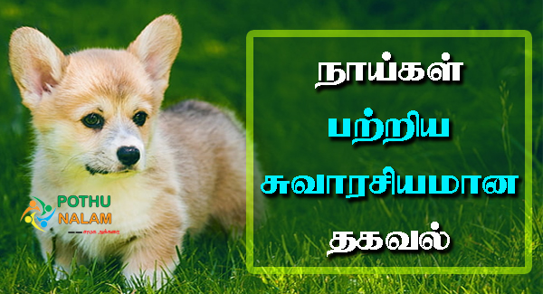 About Dog in Tamil